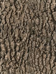 seamless bark tree texture