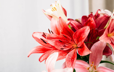 Colorful lily flowers
