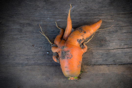 unusual shaped carrot on a wooden background