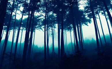 fairytale misty forest