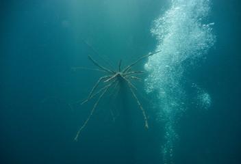 Branches underwater