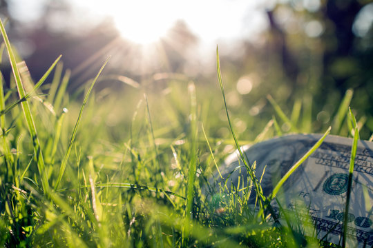 A hundred-dollar bill among the grass on a green lawn. against the rays of dawn