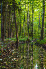 Reflections of trees in a forest pond