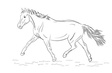 A sketch of a freely trotting horse.