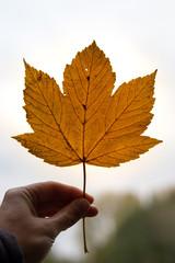 autumn leaf in hand