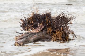Baumstumpf am Strand