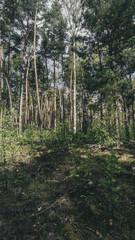 Trees [Vertical]