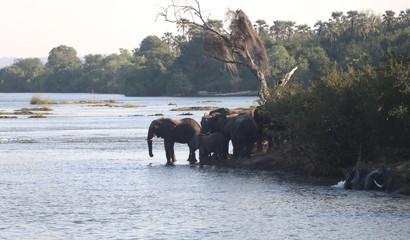 Zambezi Elephants