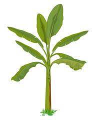 banana tree vector design
