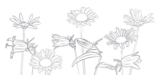 vector drawing daisy flowers