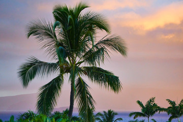 Tropical palm trees in Maui sunset