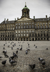 Amsterdam square with pigeons