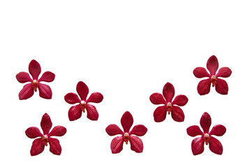 Flower Frame from red color orchid isolated on white background and space for text.