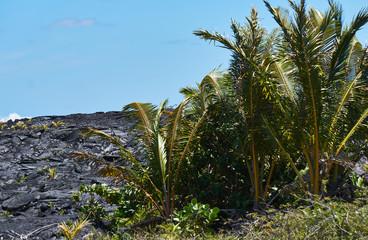 Lava Fields on the Hawaiian Big Island