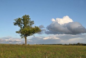 Czech typical summer landscape with tree. Landscape with meadow and clouds.