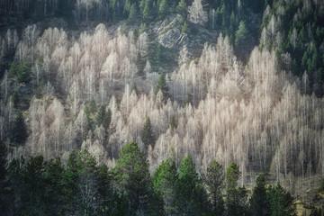 Vue sur une forêt en hiver à Gavarnie