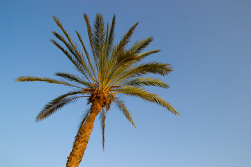 Palm tree with the blue sky on the background