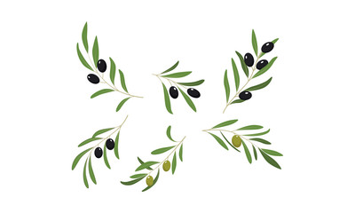 Olive branches with leaves and olives vector Illustration on a white background