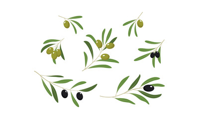 Olive branches with leaves and olives set vector Illustration on a white background