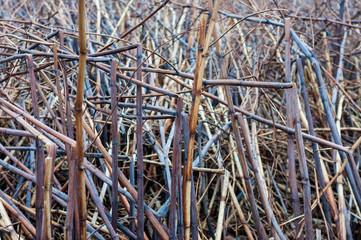 Dead dry vegetation after wind storm