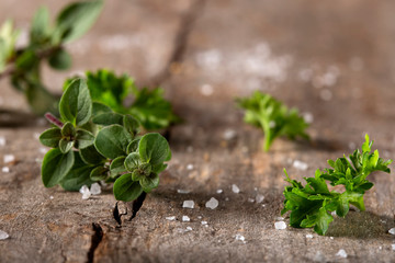 Thyme and curly parsley with salt on wood rustic background