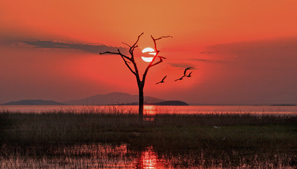Aluminium Prints Brick Scenic sunset view of Lake Kariba with the sun setting just behind a bare dead tree with good clouds. Lake Kariba, Matusadona National Park, Zimbabwe