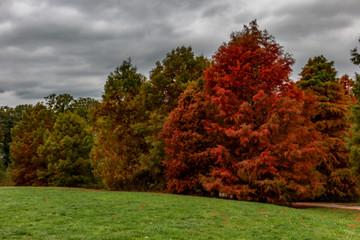 tolle Herbststimmung im Park
