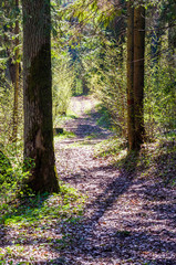 Curved forest pathway