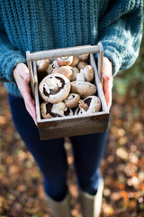 Close Up Of Woman Holding Wooden Baket Of Freshly Picked Wild Mushrooms
