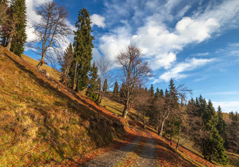 Colorulf autumn nature landscape in rodnei mountains with trees, blue sky and clouds