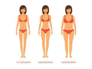 Human body types. Women as endomorph, ectomorph and mesomorph.