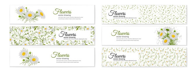 Floral posters, banners, greeting card - camomiles.