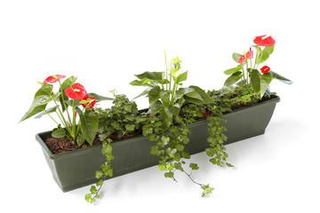 Blumenkasten  auf weiß isoliert