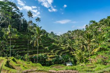 Tegalalang Rice Terrace in Ubud Bali