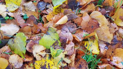 Autumn leafs on the ground