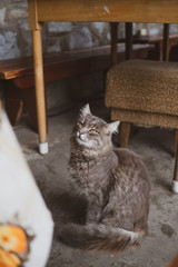 Cute cat in countryside house