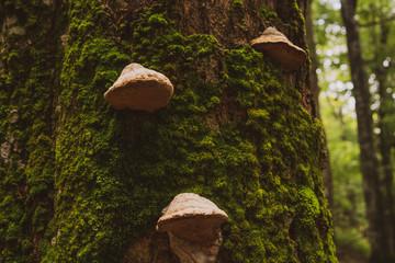 Mushrooms and moss on tree