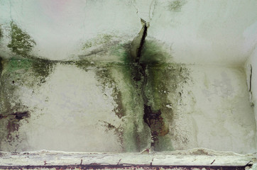 Water Damage On Fungus Mold Weathered Wall