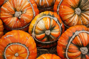 "Pumpkins - ""Turks Turban"" or French Turban Squashes"