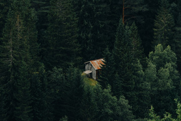 Old shack in forest