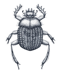 Sacred beetle of scarabs tattoo art. Dot work tattoo. Insect. Symbol of eternal life, resurrection, revival