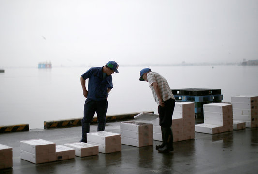 Fish traders check squid before an auction at Hakodate wholesale market in Hakodate