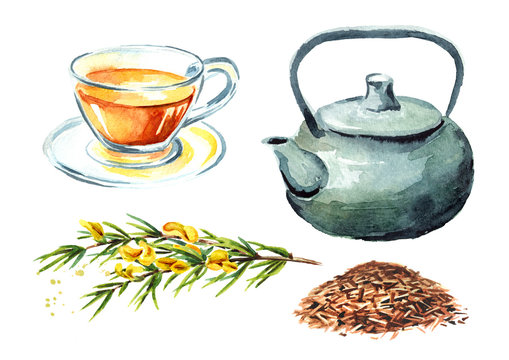 Rooibos healthy organic tea set, with cup, teapot and branch of the rooibos plant. Watercolor hand drawn illustration  isolated on white background