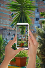 A tourist is taking a photo of a small green palm tree in a pot illuminated by the backlight of the sun on a mobile phone