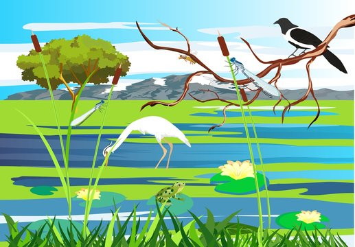White  heron, magpie on the tree brunch  lake, gragonflies, wetland landscape, vector wildlife