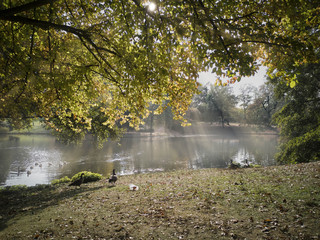 Autumn impression at the lake with fog and sunbeams