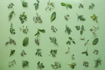 Various leaves of herbs