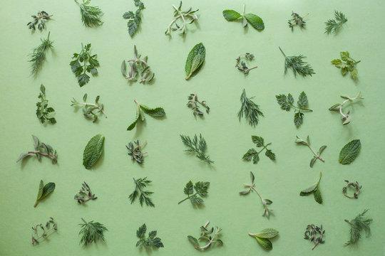 Various leaves of herbs