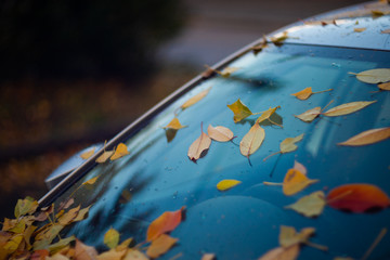 car windshield with orange leaves on it. The car has long stood in the parking lot and does not go