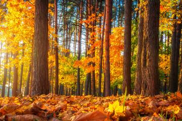 Fall. Autumn nature landscape